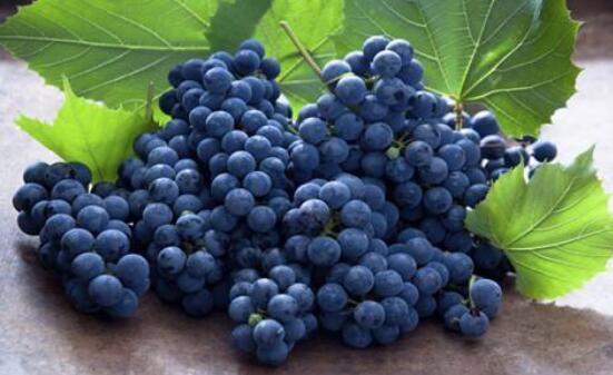 葡萄怎么保存时间长,四种方法让你葡萄持续保鲜